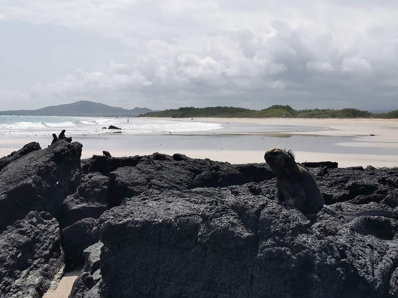 Potepanja Mepijevcev: Galapagos