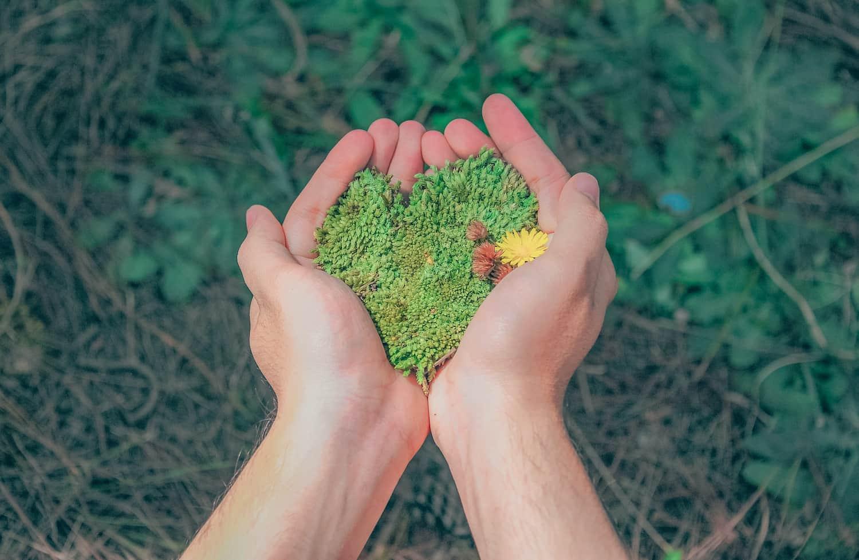 Barvitost zelene: kam vse segajo razsežnosti okoljevarstva